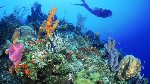oyster-scuba-diving-resorts_596x334